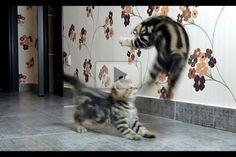 ♥ Kitten Fight Dancing - Love Meow