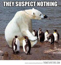 They still suspect nothing…