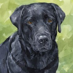 Mind Blowing Facts About Labrador Retrievers And Ideas. Amazing Facts About Labrador Retrievers And Ideas. Labrador Noir, Labrador Retriever Dog, Black Labrador, Golden Labrador, Animal Paintings, Animal Drawings, Indian Paintings, Abstract Paintings, Painting Art