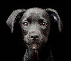 EN IMAGES. Les chiens les plus craquants du monde ont leur concours photo