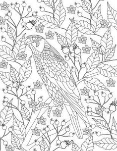 bird-colouring-page-print.jpg?4267595533463895031