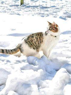 Schnee Katze Animals, Pictures, Snow, Cats, Kunst, Animales, Animaux, Animal, Animais
