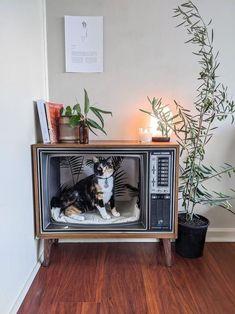 Decoration Inspiration, Room Inspiration, Deco Cool, Deco Originale, Cat Room, Pet Furniture, Aesthetic Room Decor, Dream Rooms, Diy Home Decor