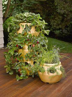 Strawberry & Herb Planter: Terracotta Colored Polyethylene Pot