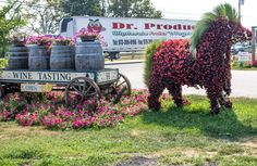 Horse made of flowers, Habers farm, Riverhead, NY (09/03/2015)