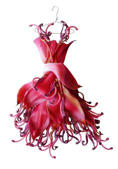 Something quite interesting...Sandra Alcorn makes miniature dresses out of petals and leaves.