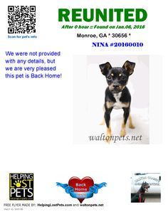 Helping Lost Pets | Dog - Chihuahua - Reunited