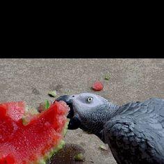 Ohhh watermelon