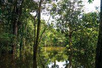 Selva inundable en el caño Tarapoto. Durante la estación de aguas altas la fauna acuática se dispersa para reproducirse, alimentarse y escap...