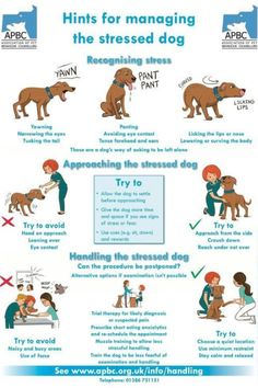 How to approach and deal with a stressed dog.