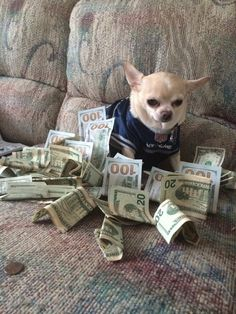 When it's finally payday. | 22 Animals That Are Basically All Of Us IRL