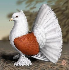 King Pigeons For Sale | Show Kings | White Kings ...