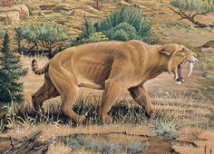 Prehistoric cat