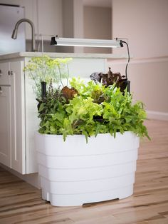 Create an edible oasis indoors! We took our Gardener's Revolution Classic Planter and added a high-output LED grow light for year-round growing.