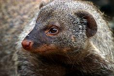 https://flic.kr/p/DSsSYV   wildwerk: mungo sucht mango #wildwerk: #mungo #sucht #mango http://www.wildwerk.com