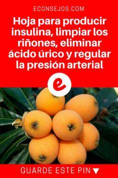 Hojas de nispero | Hoja para producir insulina, limpiar los riñones, eliminar ácido úrico y regular la presión arterial | Hoja para producir insulina, limpiar los riñones, eliminar ácido úrico y regular la presión arterial.