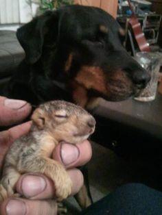 rescue squirrel