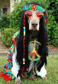 Hippie Dog