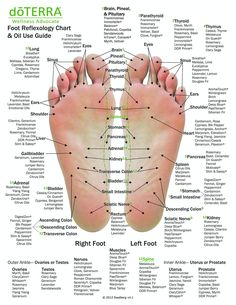 Hand & Foot reflexology chart indicating possible essential oil uses for various reflex points.s great used as reference education or for class handouts. Essential Oil Uses, Doterra Essential Oils, Health Benefits, Health Tips, Health Care, Foot Chart, Tomato Nutrition, Foot Reflexology, Benefits Of Reflexology