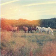 See wild horses.