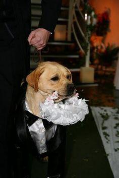 Bora casar?