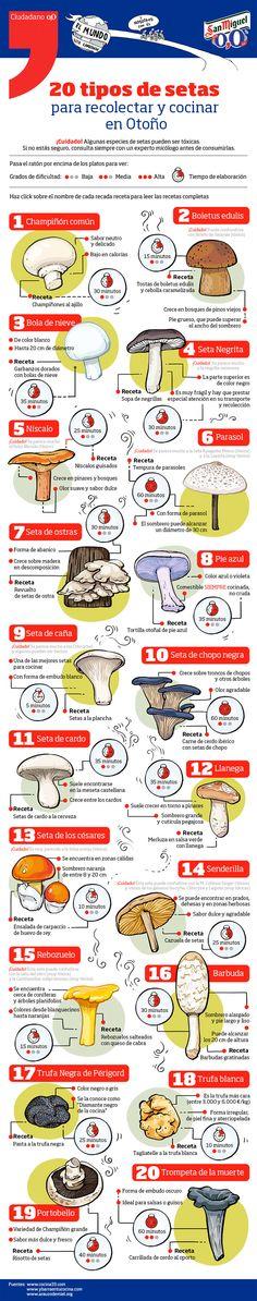 20 tipos de setas para recolectar y cocinar en Otoño Infografía