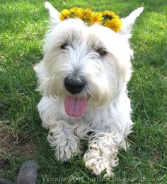 Happy Spring, Happy Easter, from a very happy dog!