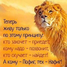 New quotes positive people sayings ideas Smile Quotes, New Quotes, Words Quotes, Funny Quotes, Positive People, Positive Quotes, Motivational Words, Inspirational Quotes, Russian Quotes