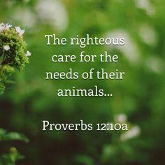 * Proverbs 12:10a