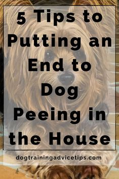 Basic Dog Training, Training Your Puppy, Dog Hand Signals, Support Dog, Dog Potty, Dog Pee, Wiener Dogs, Aggressive Dog, Dog Behavior