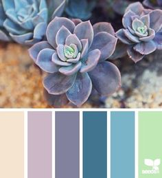 Succulent spring color palette To help you get started, we've selected ten gorgeous color schemes from the amazing Design Seeds website. These might be just what you need for your spring designs! Spring Color Palette, Colour Pallette, Color Palate, Spring Colors, Colour Schemes, Color Patterns, Color Combos, Design Seeds, Pantone