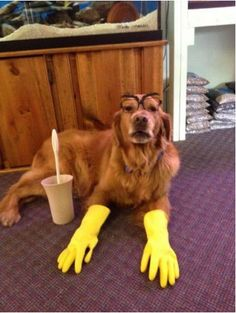 Need some extra hands around the house? Give us a call! (248) 584-1819