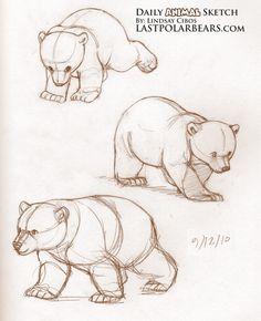 Daily Animal Sketch – Polar Bear Cub – Knut – Last of the Polar Bears Animal Sketches, Art Drawings Sketches, Cartoon Drawings, Animal Drawings, Cute Drawings, Bear Sketch, Bear Drawing, Bear Art, Bear Cubs