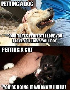 So true. I swear my cat has been plotting to kill me for some reason hes never in a good mood unless we bring out the soft food....