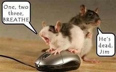 One, Two, Three, BREATHE.    He's dead Jim.    Two mice (the animal).  One trying to give CPR to a computer mouse.