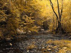 Fall Creek in the Blue Ridge.  Photo by: https://www.flickr.com/photos/vamedia