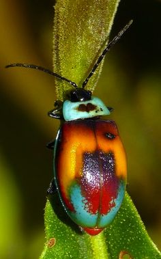 "Sacred Mother Earth ƸӜƷ Mystic & Magical placeღ✿ڿڰۣ(̆̃̃•✿⊱╮ƸӜƷ˜""*°•.•.¸¸¸. ✿  Leaf Beetle"