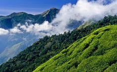 Lataa kuva 4k, teetä istutus, Intia, hills, vuoret, kesällä