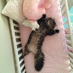 This cat assumed that this brand-new crib must be his new bed. | The 27 Most Important Things Cats Did In 2015