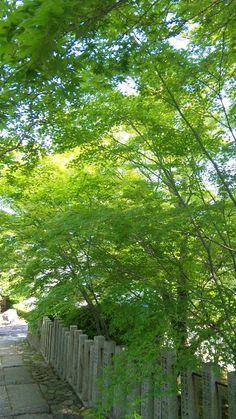 當麻寺の青空と青紅葉 : あをによし 奈良の都の 薬草曼荼羅