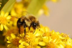 The benefit of bees, bee facts, making a garden bee house Bee Facts, Bee House, Beneficial Insects, Garden Projects, Garden Ideas, Bee Happy, Mother Nature, Gardening Tips, New England