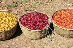 Different type of coffees from El Salvador