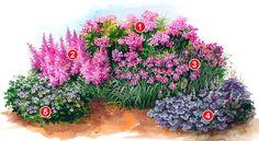 схема клумбы из многолетников 1.Флоксы пурпурной или малиновой окраски; 2.Астильба с розовыми кистями, пышно цветущая в течение всего лета; 3.Лилейник с фиолетовыми или лиловыми чашечками цветов; 4.Гейхера с декоративными морозостойкими листьями; 5.Герань великолепная, радующая и цветением и пестрой листвой.