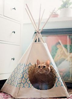 what an adorable cat hut  http://rstyle.me/n/idyprpdpe