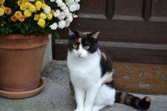 http://blog.ralfboscher.de/der-ultimative-vielleicht-weltgroesster-katzenfotos-blog-beitrag-suesse-knuffige-katzenhaft-stubentigermaessige-riesen-katzenfoto-kollektion-einer-glueckskatze-inklusive-planet-der-katzen/