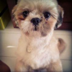 Fareja Pet   Amor, carinho. saúde e qualidade de vida para os Pets