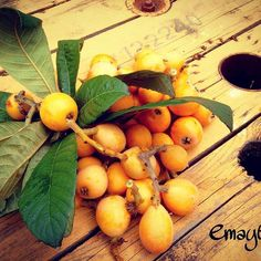 Recolectando nísperos # #healthyfood  #eco #phonepics #emayte