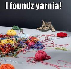 Hooray! www.kittyprettygifts.com #cute #cats #memes #lolcats