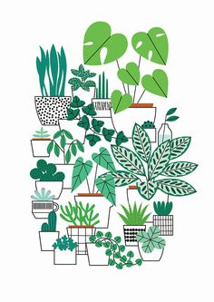 Houseplants print An x sized print featuring a selection of house plants. Professionally printed on uncoated stock. Signed & posted with board…Professional amateur Professional amateur may refer to: Plant Painting, Plant Drawing, Plant Art, Plant Decor, Plants Vs Zombies Plush, Art And Illustration, Illustration Pictures, House Plants Decor, Guache