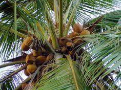 Pass the Coconut Game    Like Hot potato!